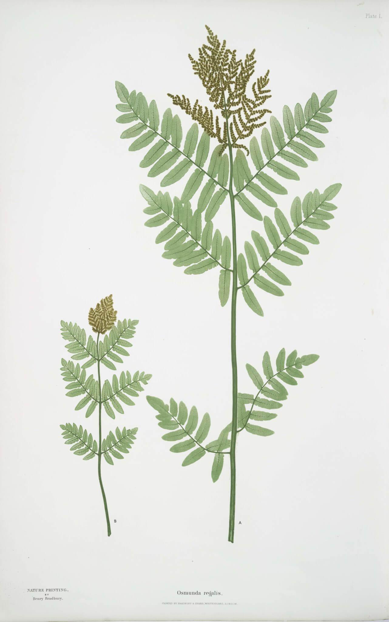 Noc świętojańska – Kwiat paproci.